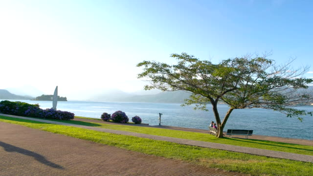 vídeos de stock e filmes b-roll de tree on water background. - lago maggiore