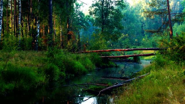 木、川の日の出 - 川岸点の映像素材/bロール