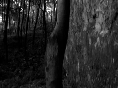 дерево панорамирование up - элемент здания стоковые видео и кадры b-roll