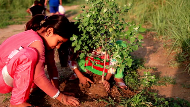 Tree plantation Elementary age cute girl portrait outdoor in the nature holding plant in hands & planting the tree. plantation stock videos & royalty-free footage