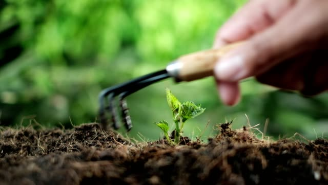 tree planting equipment and red bucket watering the plants over blurred green nature background.growing plant for save the earth concept.world environment day concept - earth day stock videos & royalty-free footage