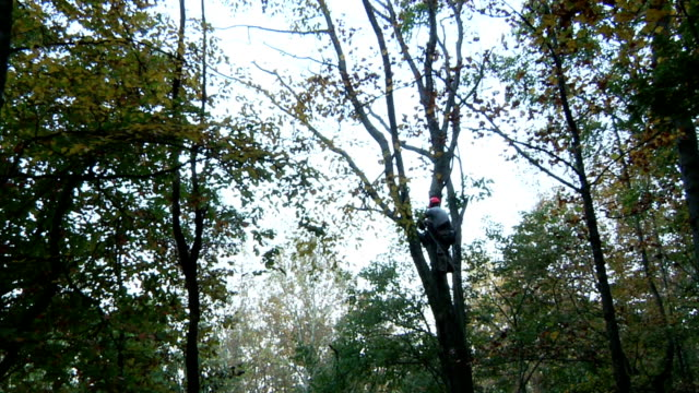 Tree Removal video