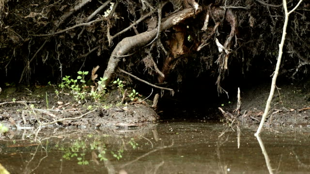 Tree root in the forest. Smooth and slow slider shot.  Clean and bright daytime. video