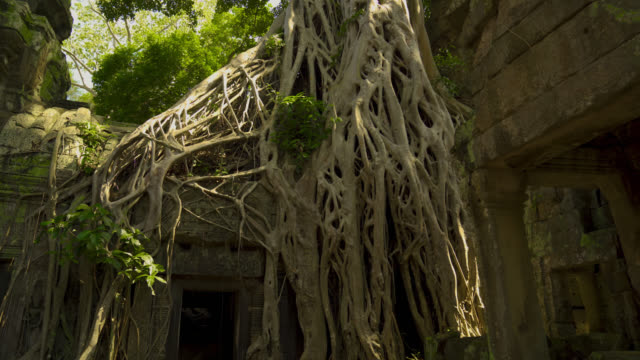 Tree Roots Growing out of Ta Prohm Temple Door in Angkor Wat, Cambodia