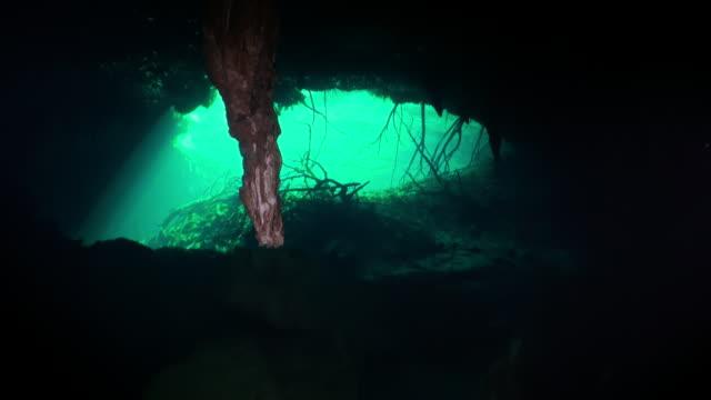 De wortels van de boom in hol onderwaterhol Yucatan Mexico cenotes. video