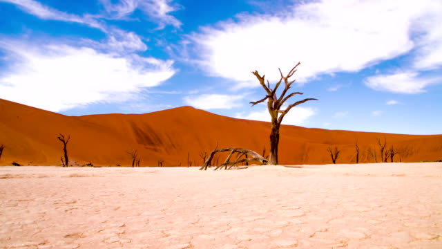DS WS Tree Sculptures In The Dead Vlei video