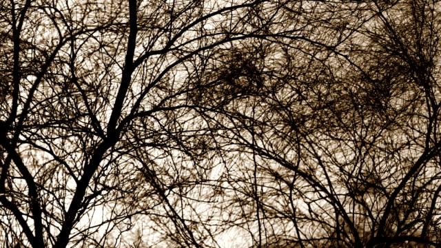 tree silhouette - albero spoglio video stock e b–roll