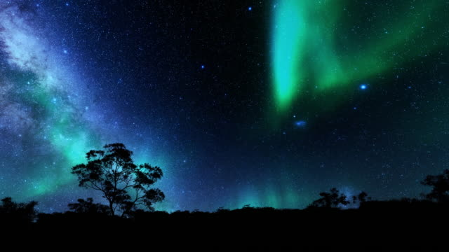 Tree silhouettes against northern lights timelapse and starry sky, 4K