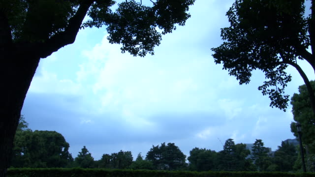 tree sky cloud 02 Japan jp201806 stock videos & royalty-free footage