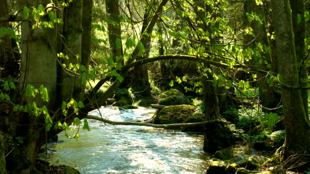 Tree Spanning Over Glittering Creek (4K/UHD to HD) video