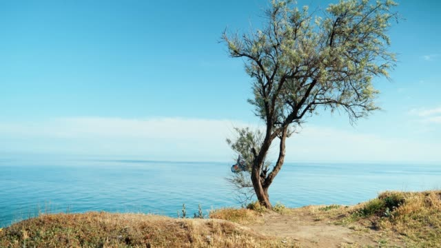 A tree stands on a cliff by the sea