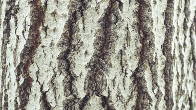 Tree structure, rough bark
