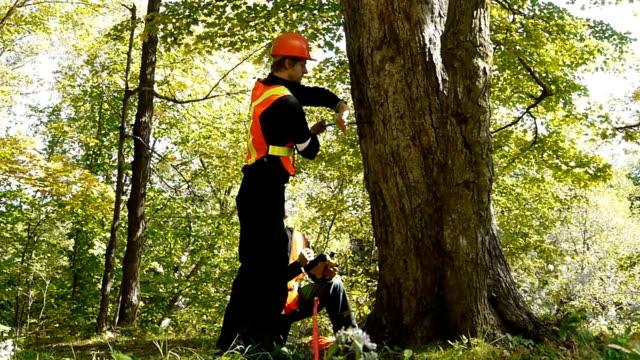 Tree Studies video