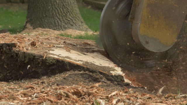 Tree stump removal A grinder shreds a tree stump in the ground sending debris into the air in slow motion grind stock videos & royalty-free footage