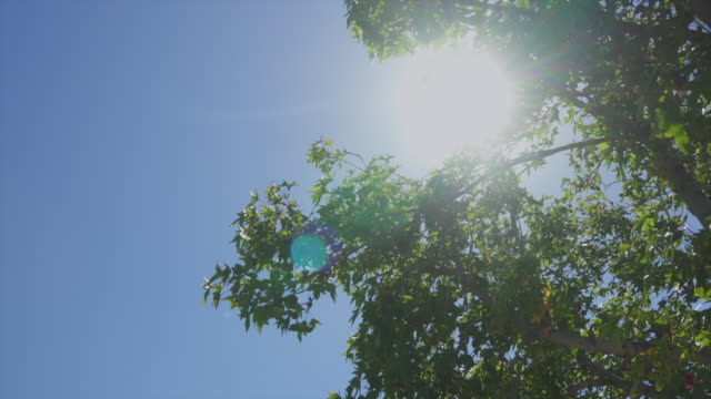 Tree Sun Bright The sun flaring into the lens blocked by green tree leaves. midday stock videos & royalty-free footage