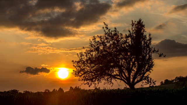 Tree & Sunset time lapse video