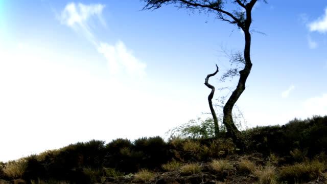 Tree timelapse video