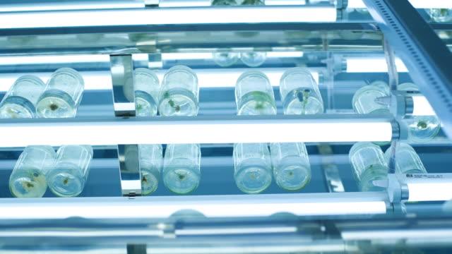 tree tissue culture lab in thailand. - bio food video stock e b–roll