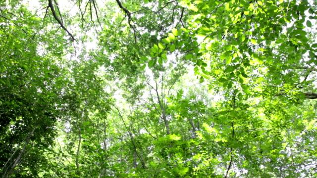 tree tops HD video