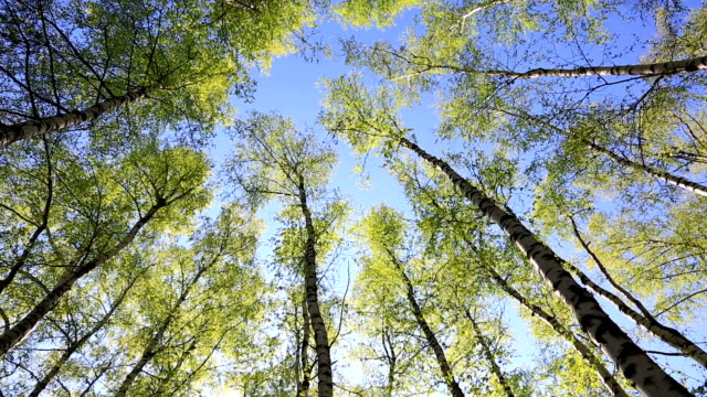 Tree tops in peaceful blue sky video