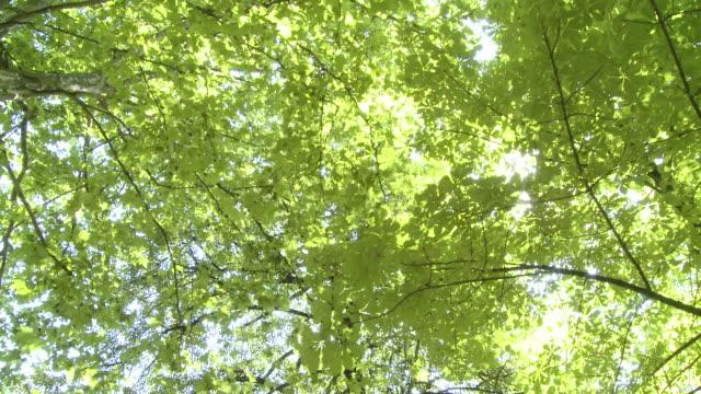 hd クレーン:ツリートップ - 木漏れ日点の映像素材/bロール