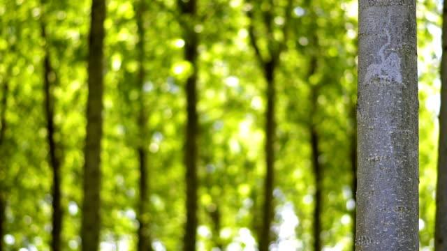 vidéos et rushes de tronc d'arbre-arrière-plan - couleur saturée