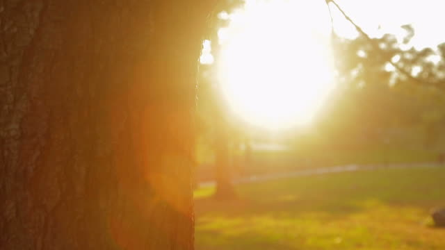 Tree trunk in Central Park with sunbeam video