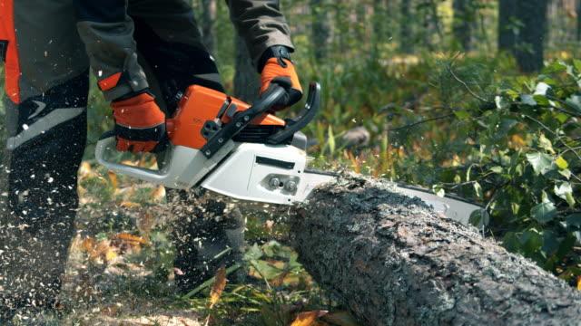 tree trunk is getting sawn by lumberjack - motosega video stock e b–roll