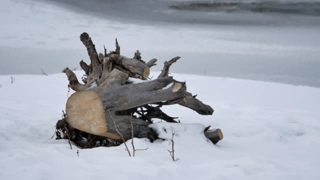 tree trunk root firewood lie near a frozen river with ice winter nature landscape outdoors - vídeo