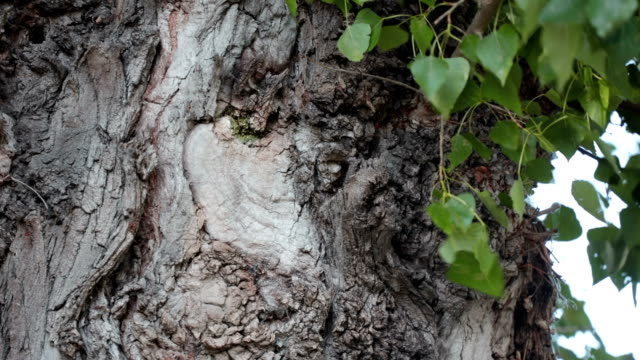 Tree trunk with leaves Tree trunk with leaves blowing in the wind plant bark stock videos & royalty-free footage