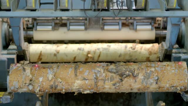 木のトランクスは、パラメータによって評価され、合板、合板および他の木材製品の生産のための生産ライン木工工場に沿って運ばれる、 - おがくず点の映像素材/bロール
