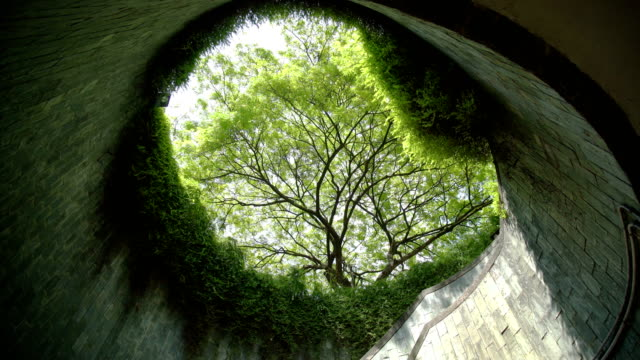 tree tunnel in summer at park - singapore architecture stock videos & royalty-free footage