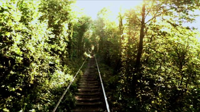 Tree tunnel video