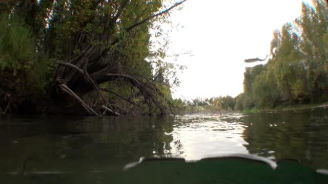 Boom onderwater in het zonlicht in water van Lena rivier in Siberië van Rusland. video