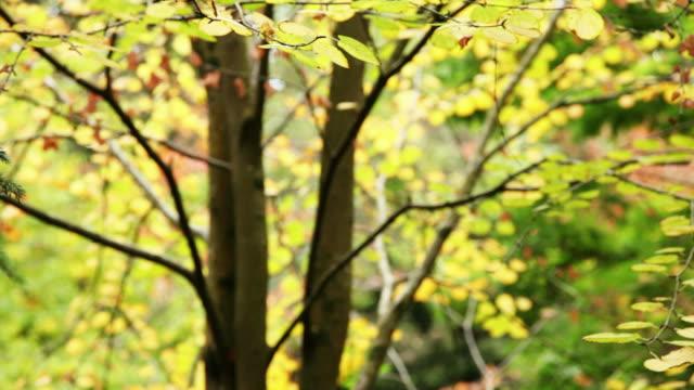 stockvideo's en b-roll-footage met tree - infaden