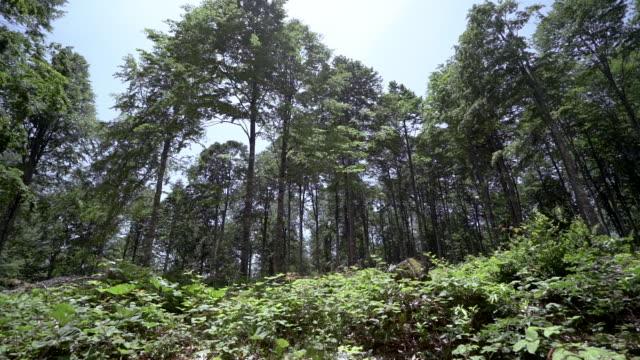 tree - дубовый лес стоковые видео и кадры b-roll