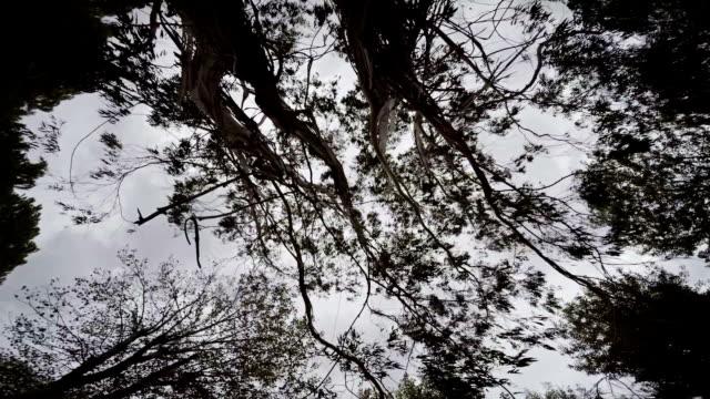 vídeos y material grabado en eventos de stock de árbol  - memorial day