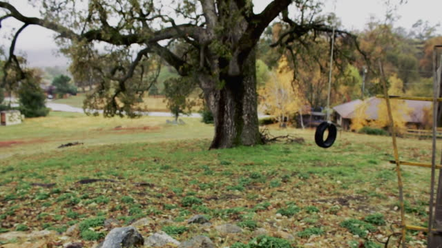 Tree with a tire swing hanging underneath video
