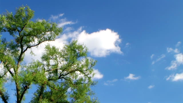 Tree with Clouds Time Lapse video