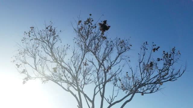 4K Tree with mild wind video