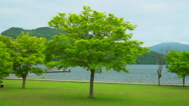 十和田湖の眺めの木 - キャンプ点の映像素材/bロール