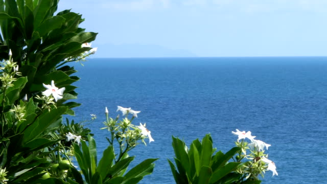 Tree with White Flowers, Sea View Background video