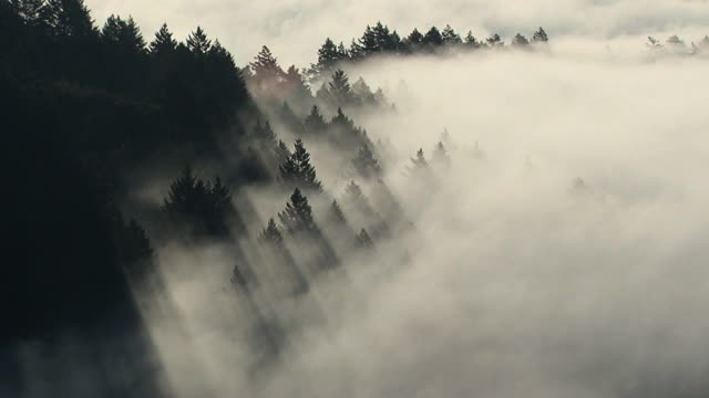 treefog - trees in mist stock videos & royalty-free footage
