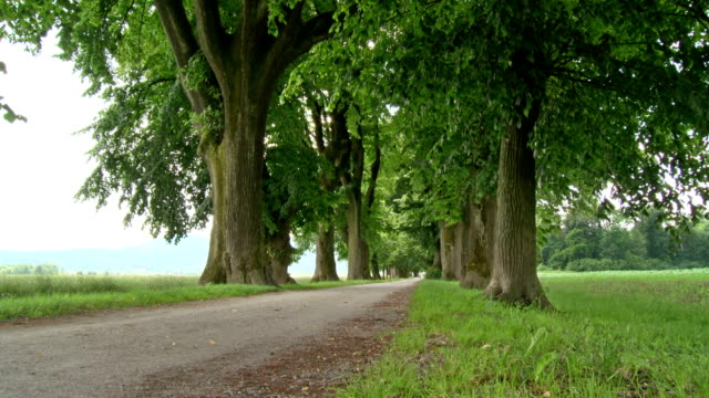 HD DOLLY: Tree-Lined Dirt Road video