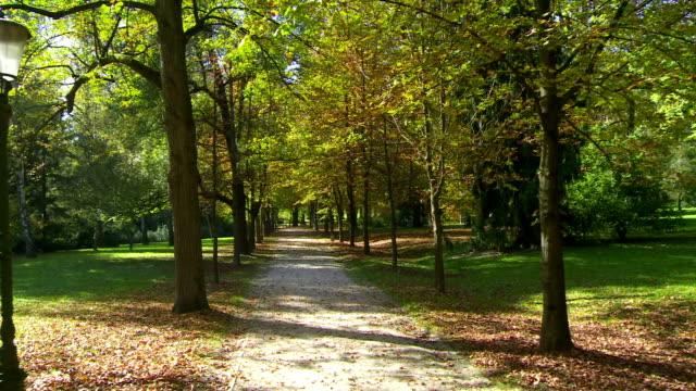 vídeos de stock e filmes b-roll de rodeado de árvores parque promenade - parque público
