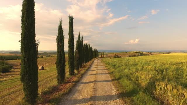 AERIAL Treelined road along wheat field video