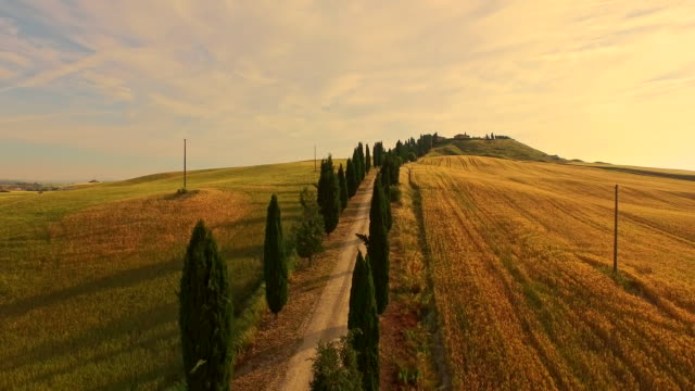 AERIAL Treelined road in the Tuscany video
