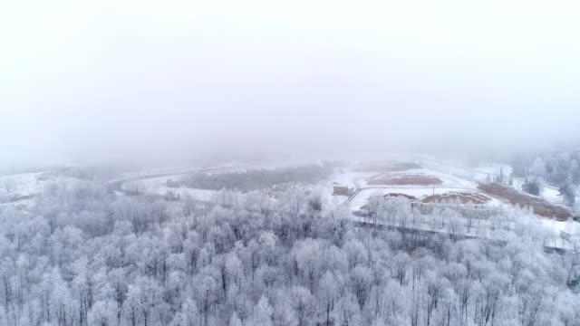bäume über dem lahemaa-park mit schnee gefüllt - kiefernwäldchen stock-videos und b-roll-filmmaterial