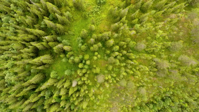 trees and forest seen from drone - норвегия стоковые видео и кадры b-roll