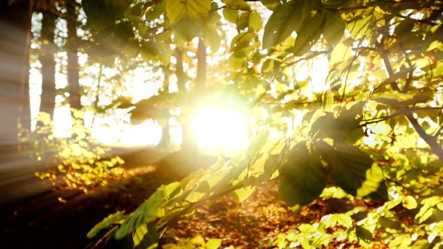 木は、秋の木漏れ日の太陽の草原。 - 木漏れ日点の映像素材/bロール